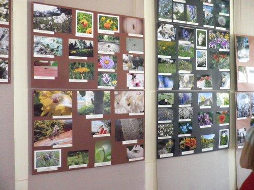 Fotografie z artykułu: 'Moje Spotkania z Przyrodą' - podsumowanie Międzyszkolnego Konkursu Fotograficznego